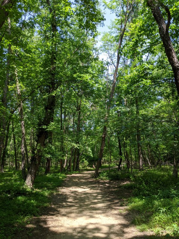 hiking trail at Long Bridge Park in Hainesport, NJ