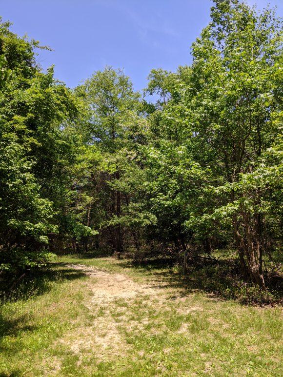 Long Bridge Park hiking trails in Hainesport, NJ