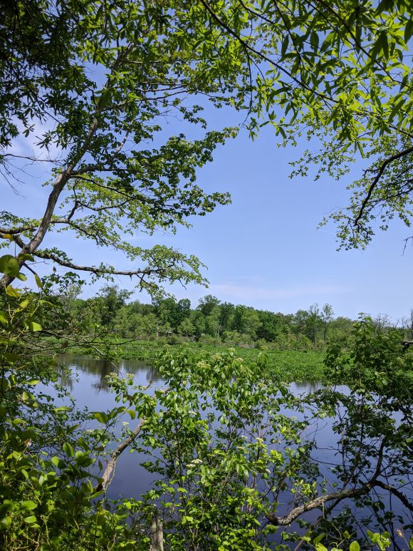 view of Rancocas Creek from hiking trails at Long Bridge Park in Hainesport, NJ
