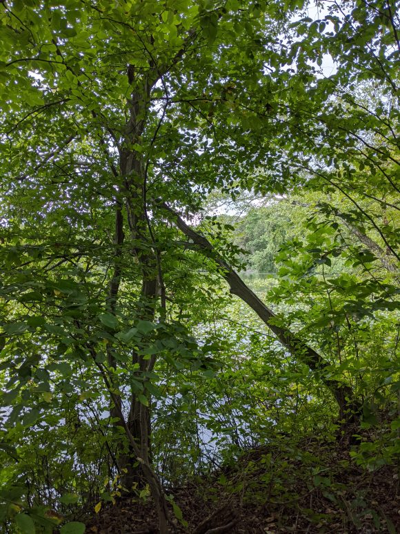 view of the ranocas creek hiking trail at Smiths Woods Park in Eastampton Township, NJ.