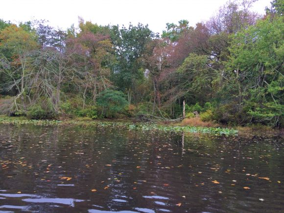 view of water at Smiths Woods Park in Eastampton Township, NJ