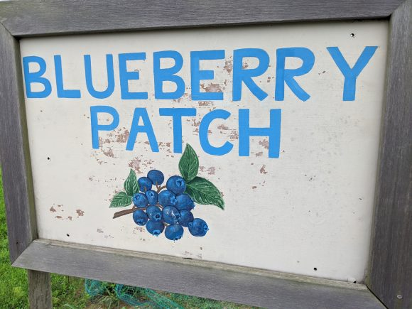 blueberry patch sign
