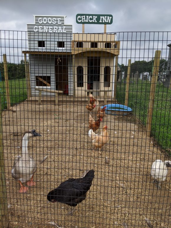 Families can visit with the farm animals at the Von Thun Farms.
