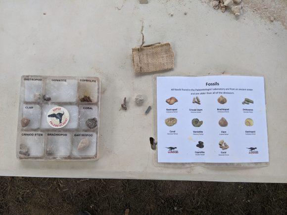 A dinosaur fossil case and identification chart at Field Station Dinosaur's Paleontologists' Laboratory