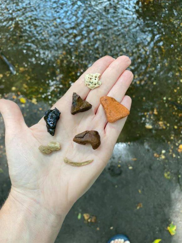handful of dinosaur fossils found at Big Brook Preserve in NJ