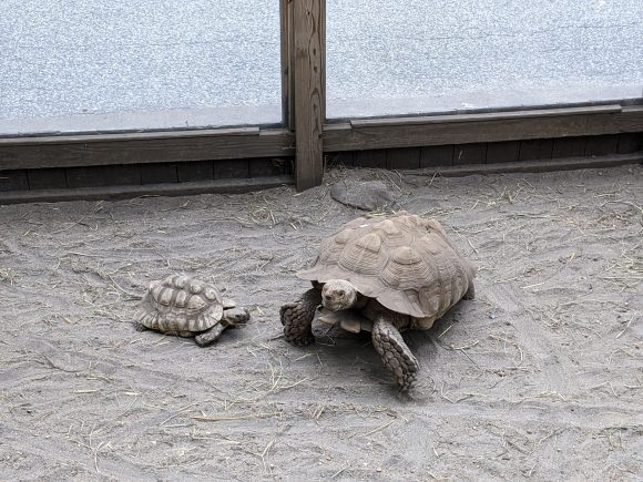 The Cohanzick Zoo in Bridgeton NJ has free admission and turtles to see.