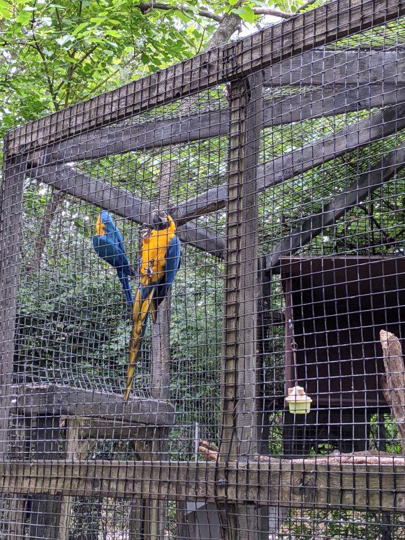 The Cohanzick Zoo McCaws