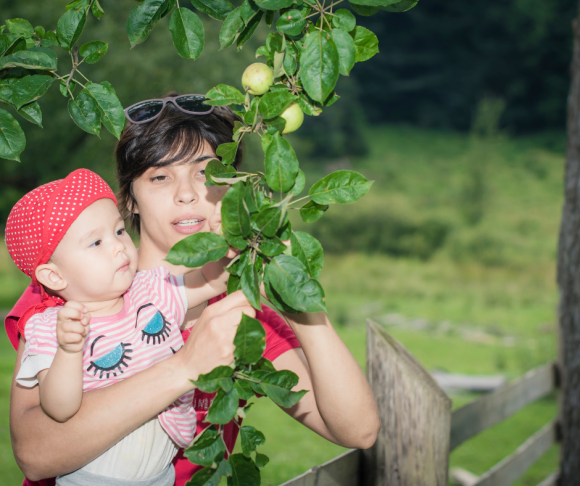New Jersey apple picking