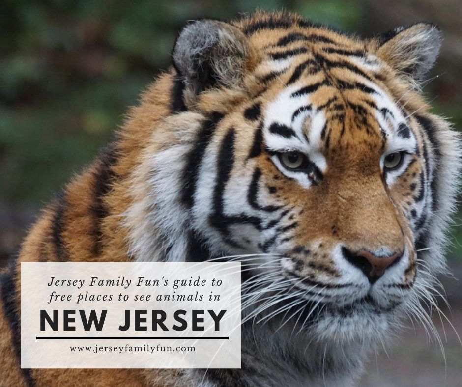 places to see animals for free in New Jersey