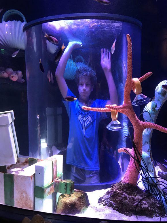 Boy in clear tunnel in fish tank at Sea Life Aquarium NJ