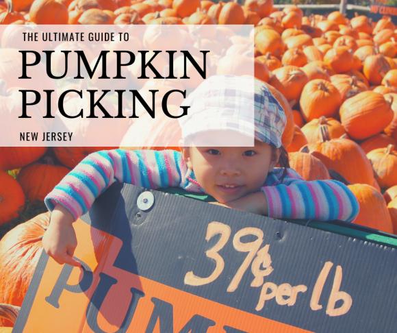 New Jersey pumpkin patches for pumpkin picking