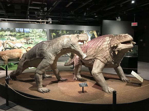 Permian Monsters Life before dinosaurs exhibit at the Academy of Natural Sciences in Philadelphia