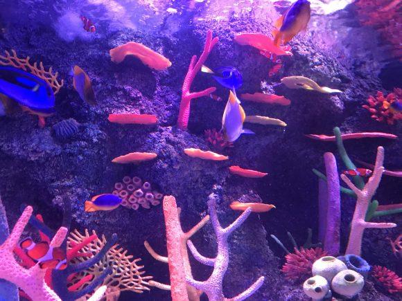 colorful fish at Sea Life Aquarium New Jersey