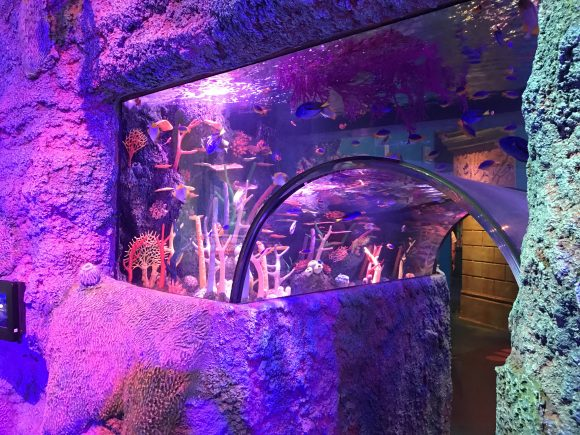 colorful underwater archway with fish and coral at Sea Life Aquarium NJ