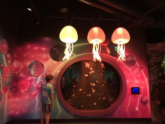 jellyfish disco at Sea Life Aquarium