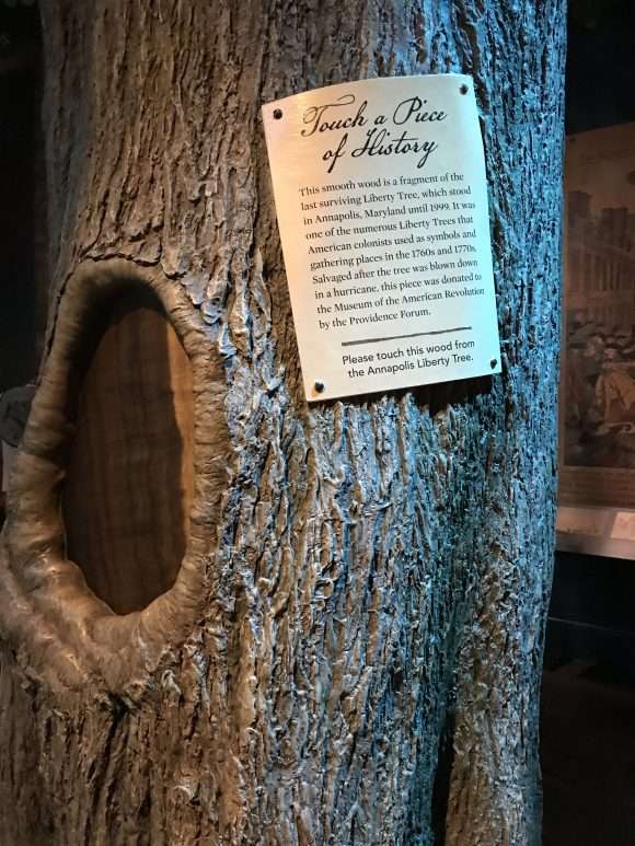 The last surviving liberty tree at the Museum of the American Revolution in Philadelphia