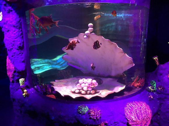 oyster tank at Sea Life Aquarium horizontal image