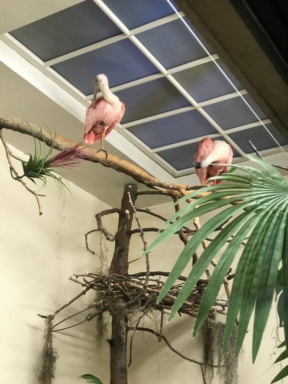 roseate spoonbills at ZooAmerica