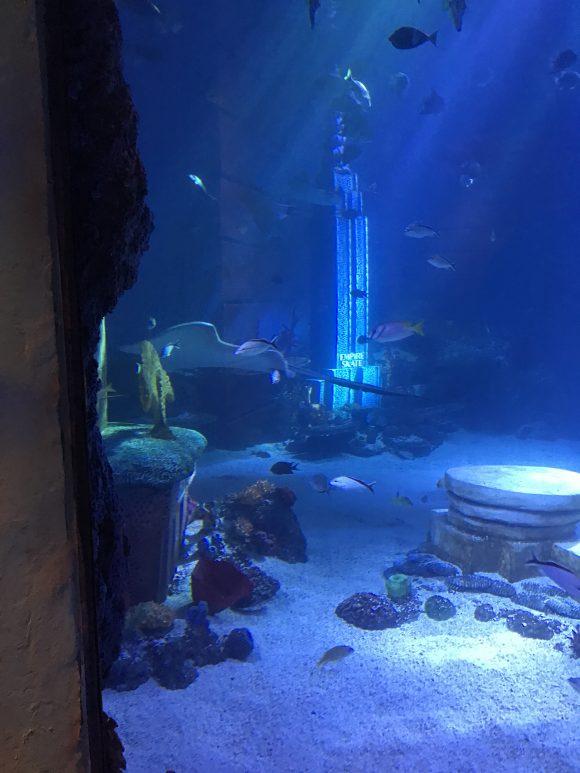 scenes from underwater tank at Sea Life Aquarium New Jersey