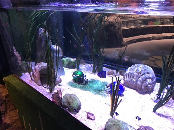 superbowl showdown fish tank at Sea Life Aquarium NJ