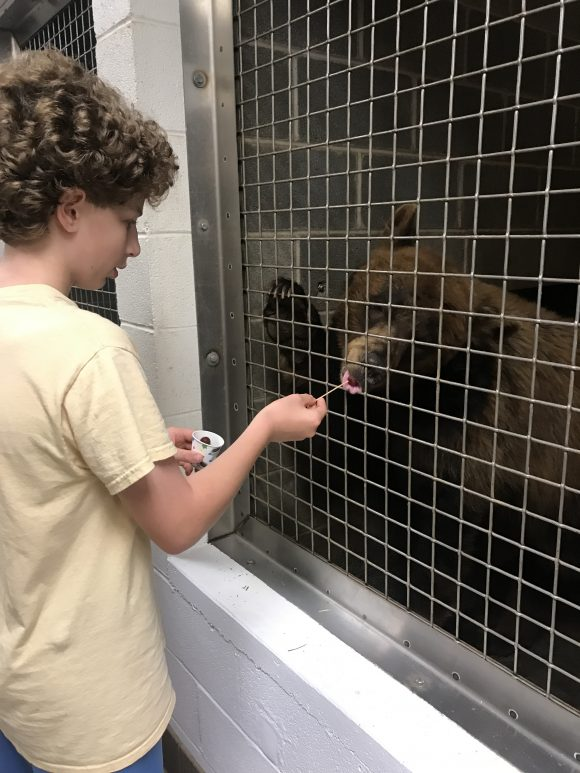 tween boy feeds bear at ZooAmerica